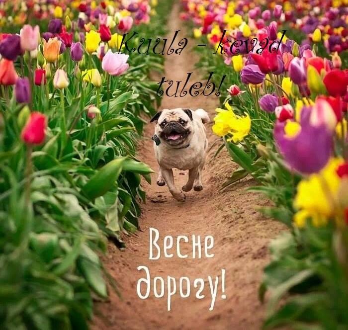 Весна идёт ! Весне дорогу !